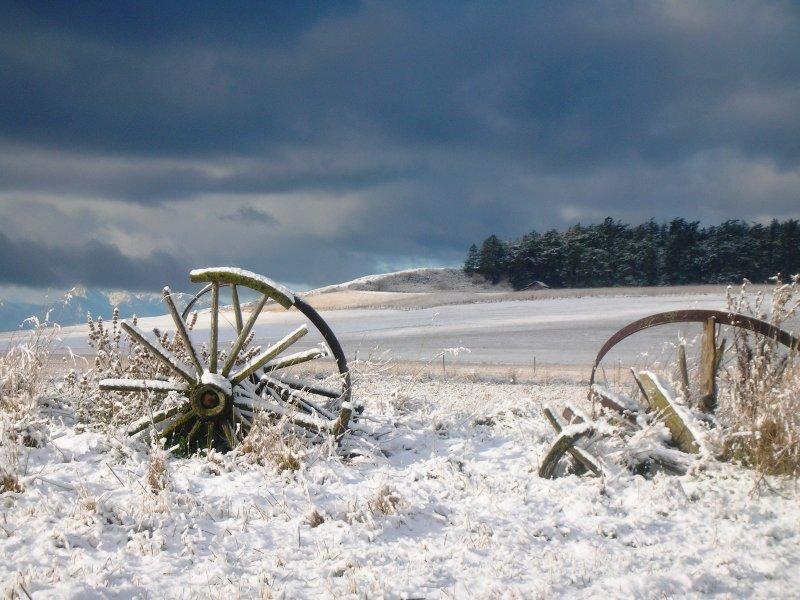 Wagon wheels in January snow