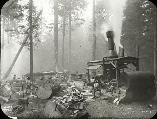 Donkey and mist 1918