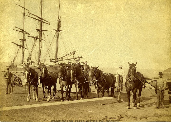 horses and ships